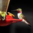 Bird #1 663