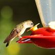 Bird #2 664