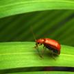 Bug 412