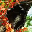 Butterfly 106