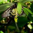 Butterfly 208