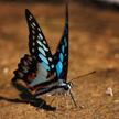 Butterfly 426