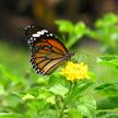 Butterfly 500