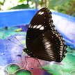 Butterfly 68