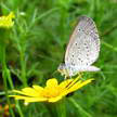 Butterfly and Daisy 309