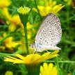 Butterfly Photo 292