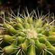 Cactus 152