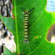 Caterpillar 303