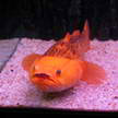 Fish 71