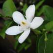 Flower 123
