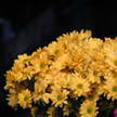 Flower 158
