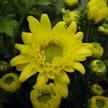 Flower 255