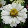 Flower 300