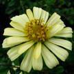 Flower 306