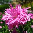Flower 363