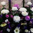 Flower 379