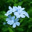 Flower 479