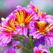 Flower 657