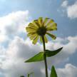 Flower Photo 307