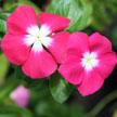 Flower 492