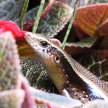 Grass Lizard 313