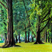 Greeny Trees 594