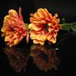 Orange gerbera daisy 530