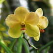 Orchid 74