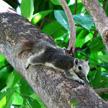 Squirrel 487