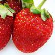 Strawberry 320
