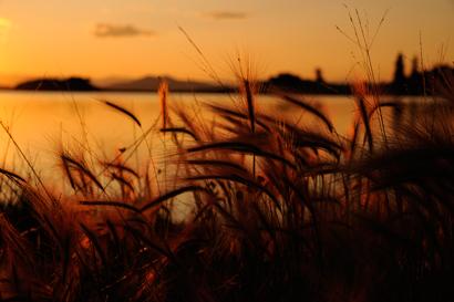 Sunset #4 637