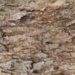 Tree Bark 403