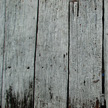 Wood Texture 444