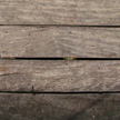 Wood Texture 478