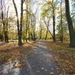 Autumn 744