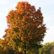 Autumn 742