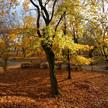 Autumn 743