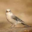 Bird 902