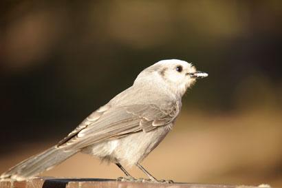 Bird 903