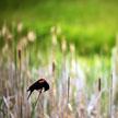 Bird 904