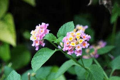 Flower 817