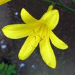 Flower 884
