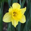 Flower 886