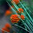 Flower 919