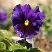 Flower 920