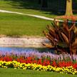 Golf Field 785