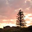 Sunset 769