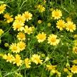 Flower 991