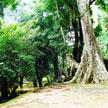 Trees 1000