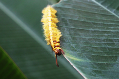 Hairy Caterpillar 1023
